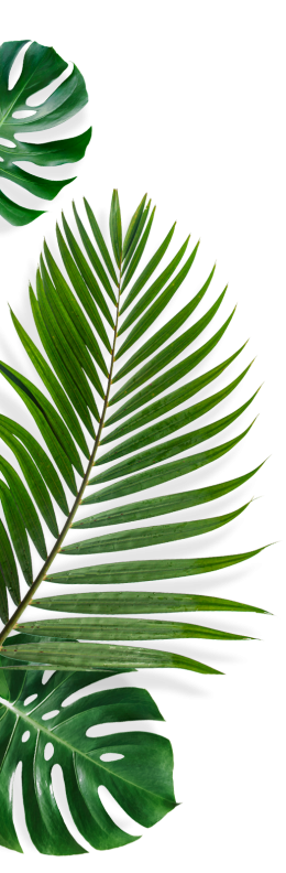 tf-feuilles-04